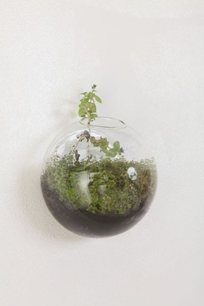 Glass Bubble Hanging Terrarium