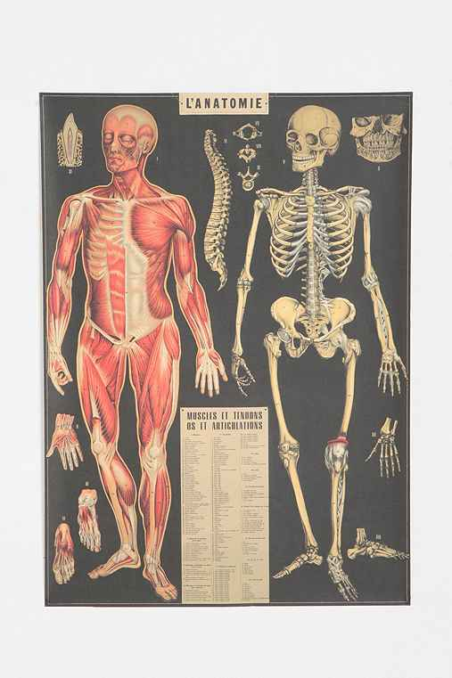 L'Anatomie Poster