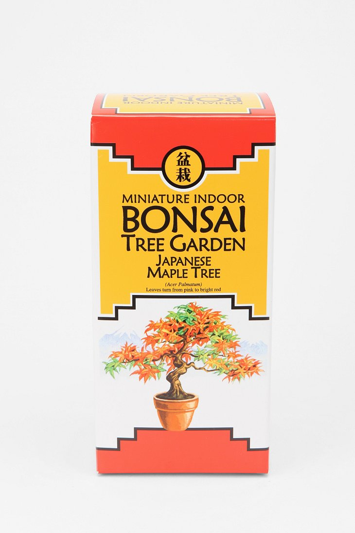 miniature bonsai tree kit urban outfitters instructions