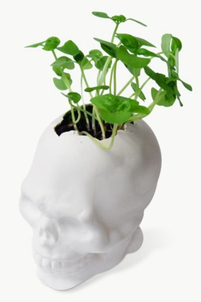 SKULL PLANT POTS on The Hunt