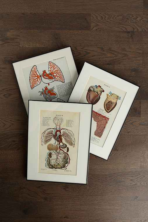 Vintage Medical Framed Color Print