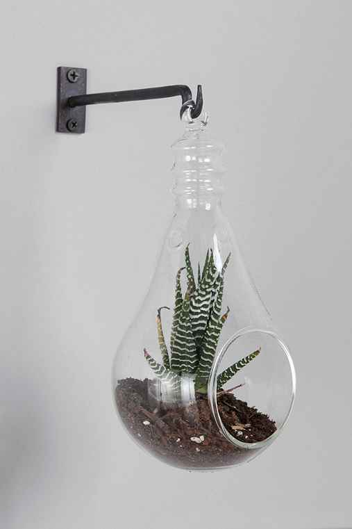 Light Bulb Hanging Terrarium