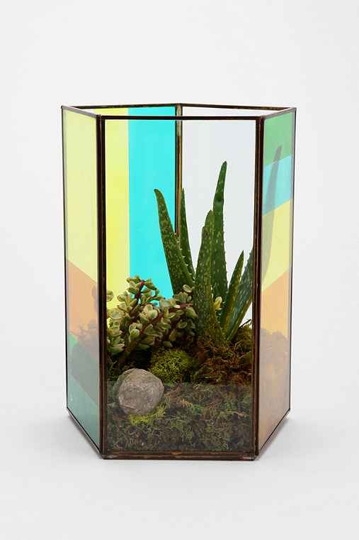 Magical Thinking Pentagon Tabletop Terrarium
