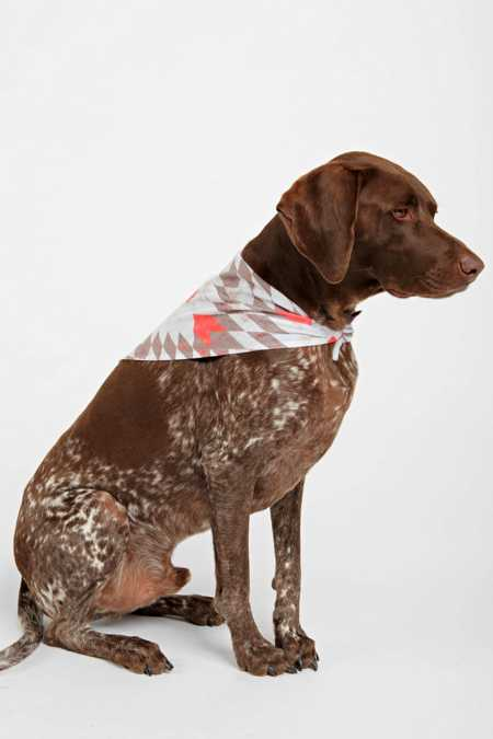 Holli Zollinger For DENY Rustic Pet Bandana