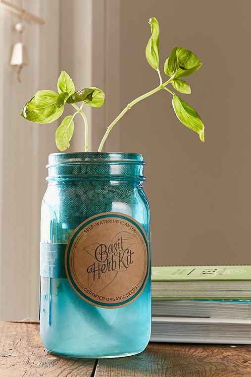Modern Sprout Hydroponic Indoor Basil Garden Kit