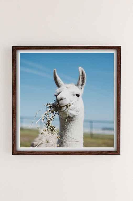 Ollie Alexander Baby Llama Drama Art Print,WALNUT WOOD,30X30