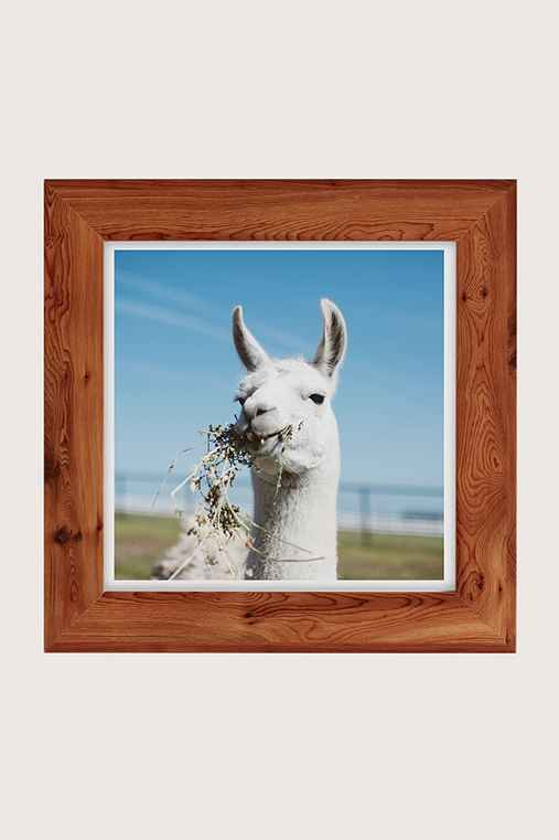 Ollie Alexander Baby Llama Drama Art Print,CEDAR,20X20