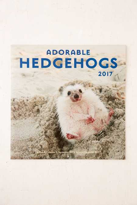 2017 Adorable Hedgehogs Wall Calendar