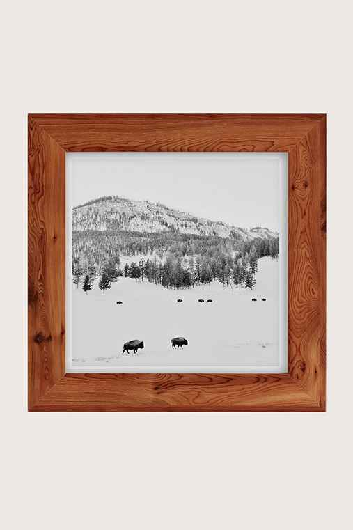 Michael O'Neal American Bison Art Print,CEDAR FRAME,16X16