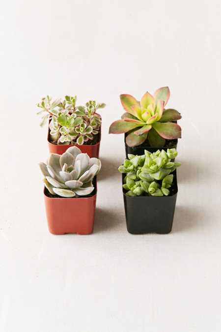 Assorted 2 Live Succulents - Set of 4