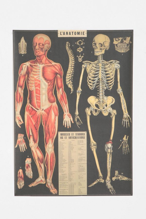 L\'Anatomie Poster | Urban Outfitters