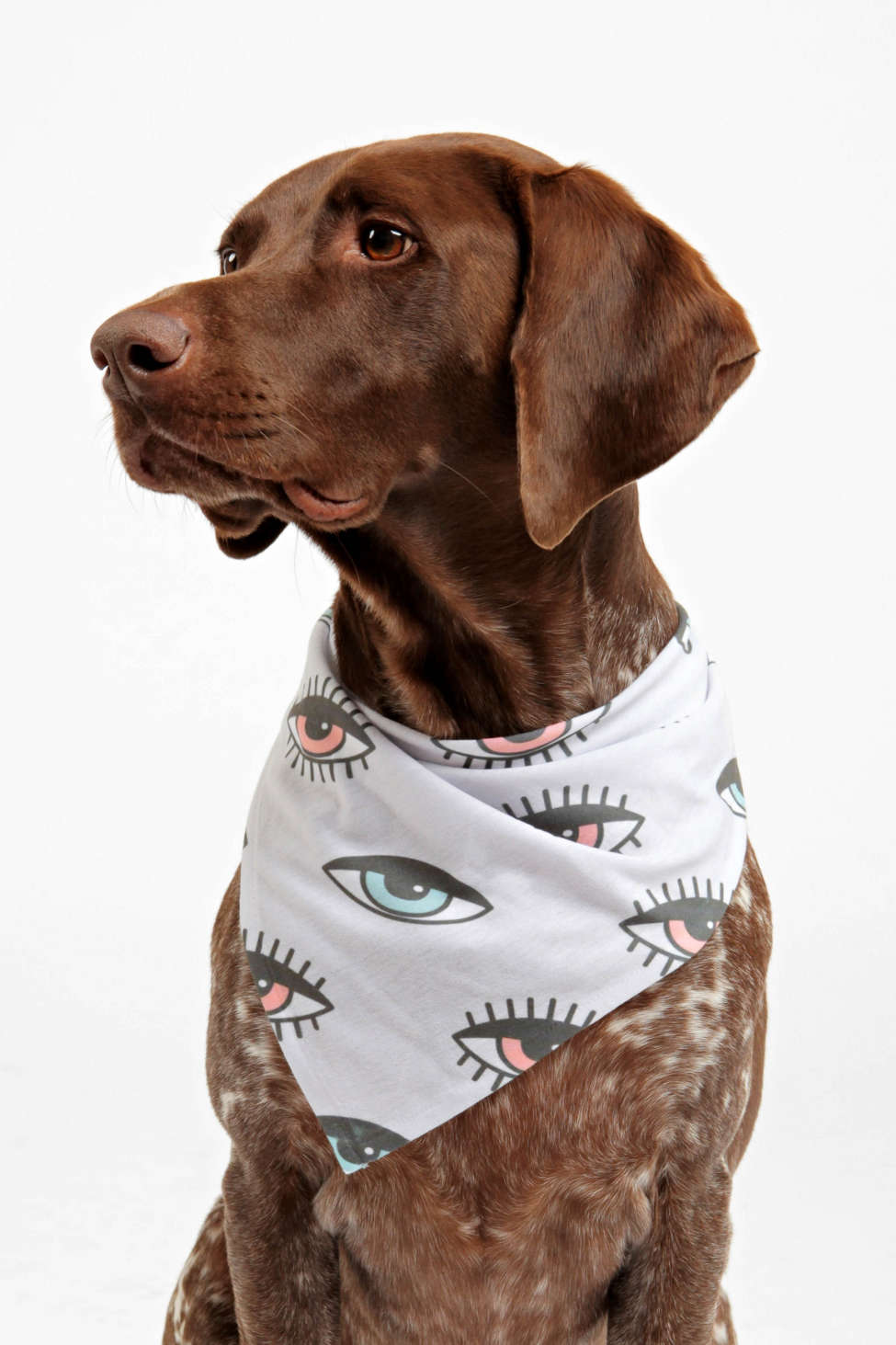 Slide View: 1: Wesley Bird For Deny His 'N Hers Pet Bandana