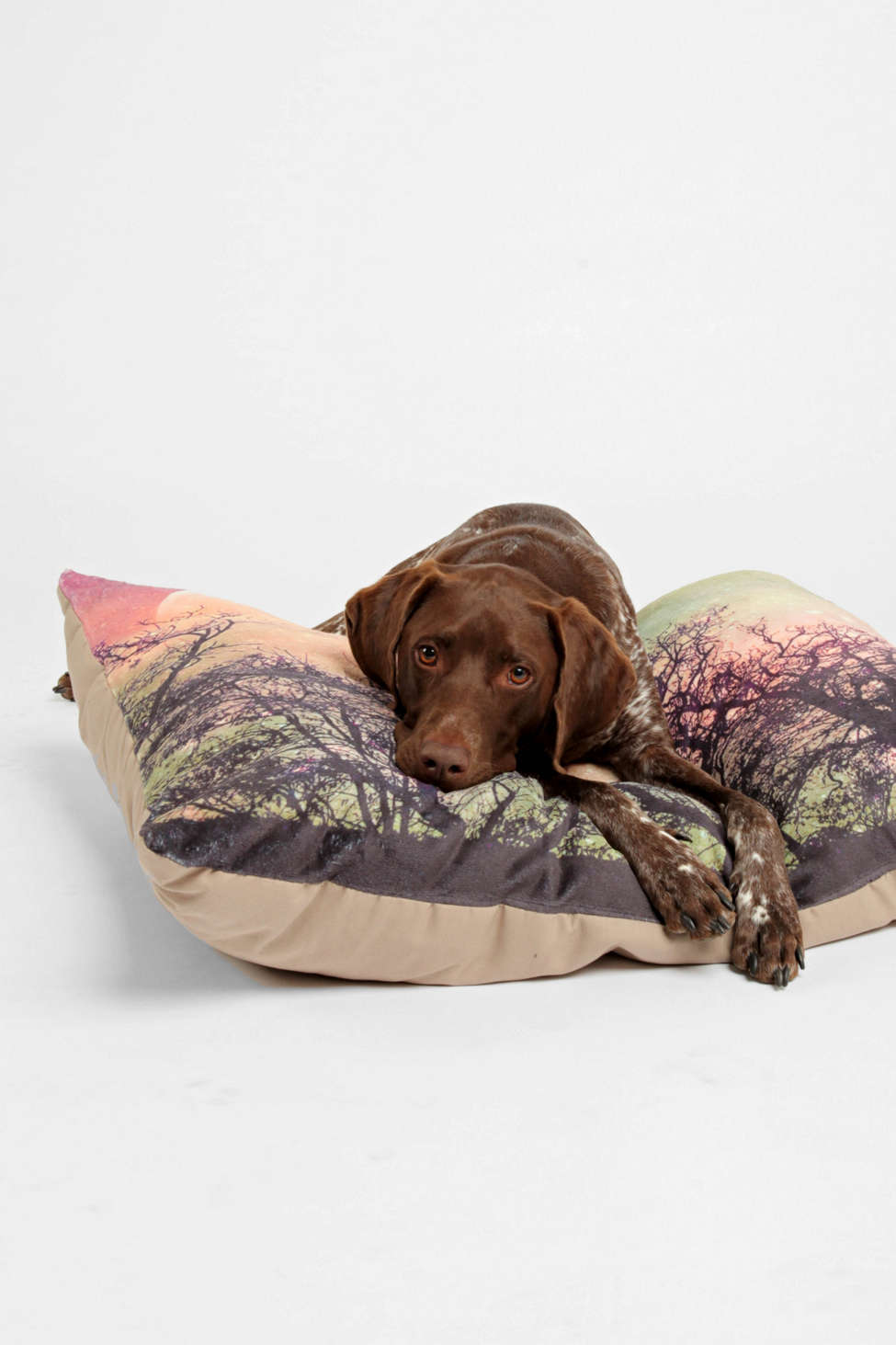 Slide View: 1: Shannon Clark For Deny Moon Magic Pet Bed