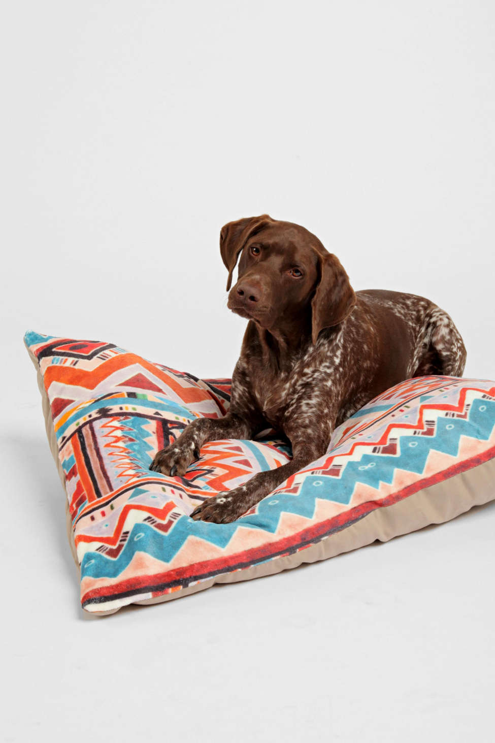 Slide View: 1: Kris Tate For Deny Cactus 1 Pet Bed