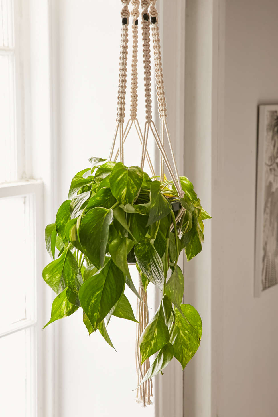 Slide View: 1: Iris Macrame Hanging Planter