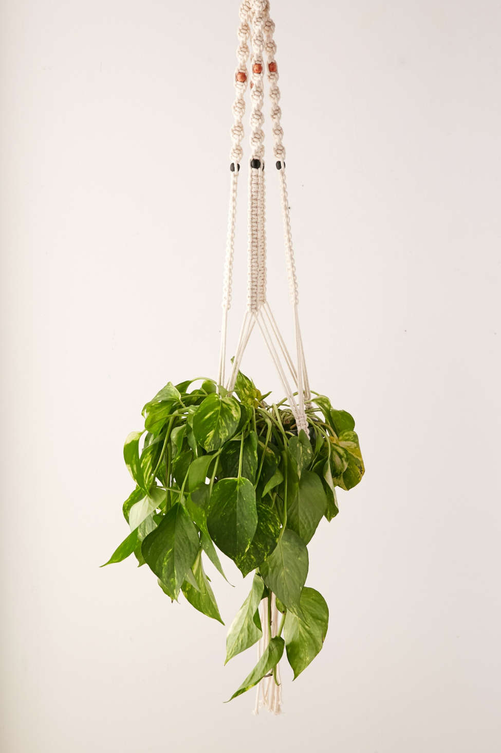 Image result for picture of hanging planter