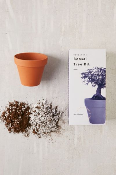 Miniature Indoor Bonsai Tree - Red One Size at Urban Outfitters