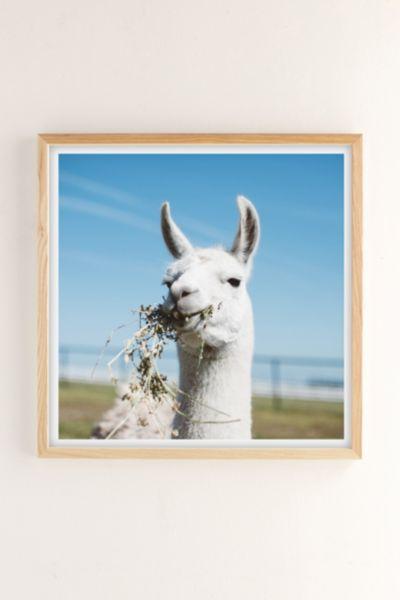 Ollie Alexander Baby Llama Drama Art Print