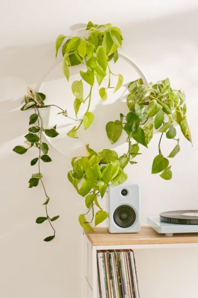 Multi Herb Wall Planter