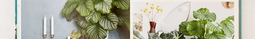 Thumbnail View 5: Urban Jungle: Living And Styling With Plants By Igor Josifovic & Judith de Graaff