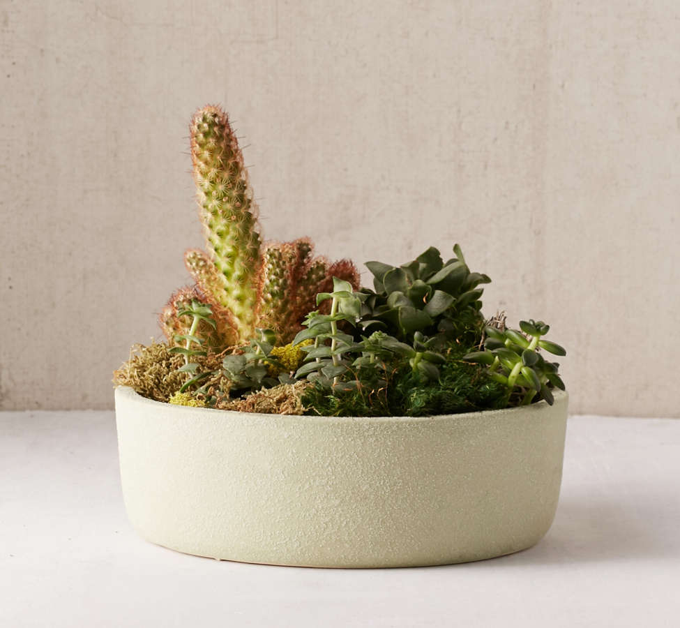"Slide View: 1: 12"" Succulent Planter"
