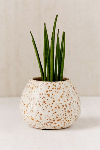 Patricia Glazed Ceramic Planter - White One Size at Urban Outfitters