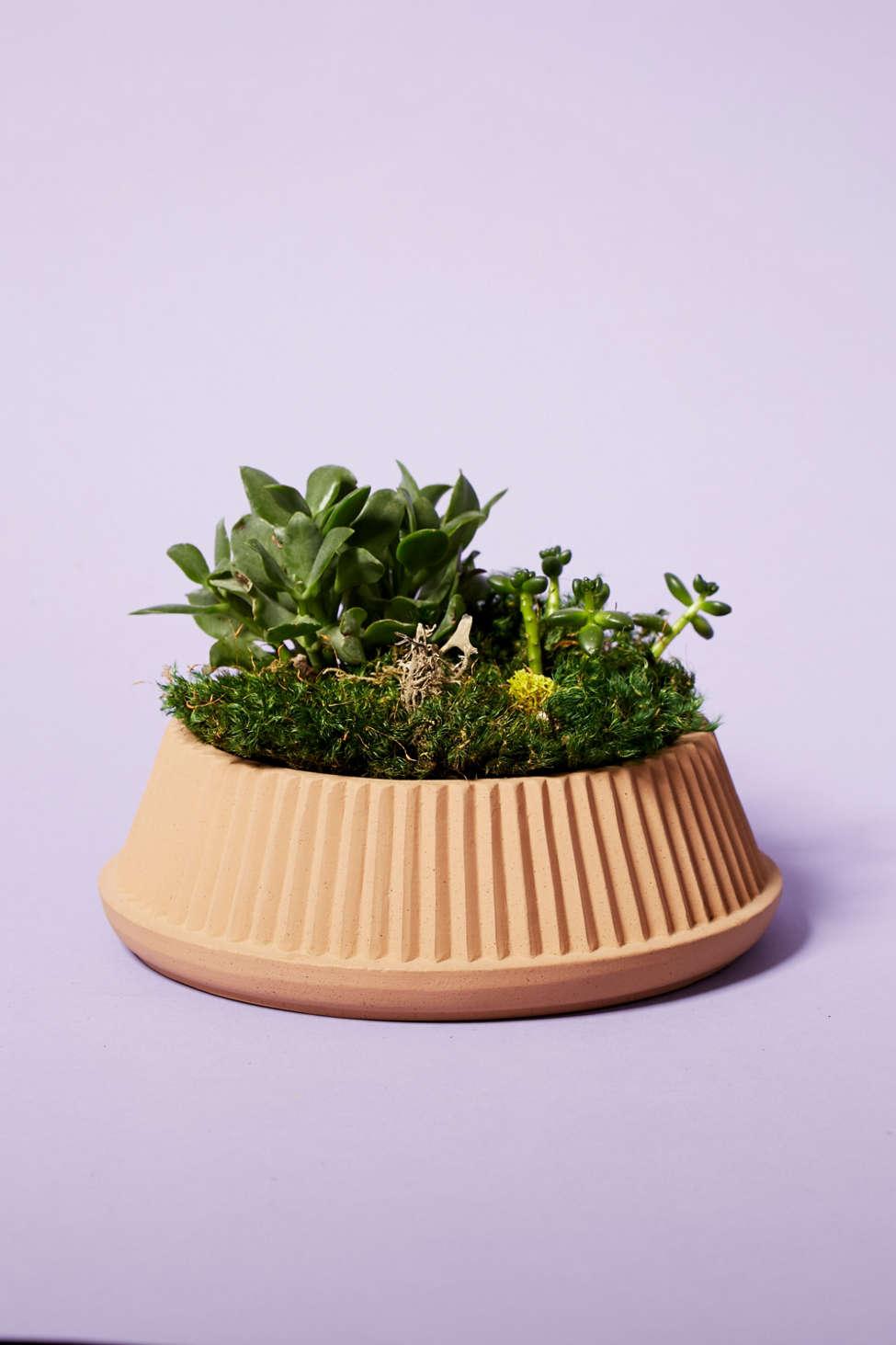 Slide View: 1: Umbra Shift Pleated Succulent Planter