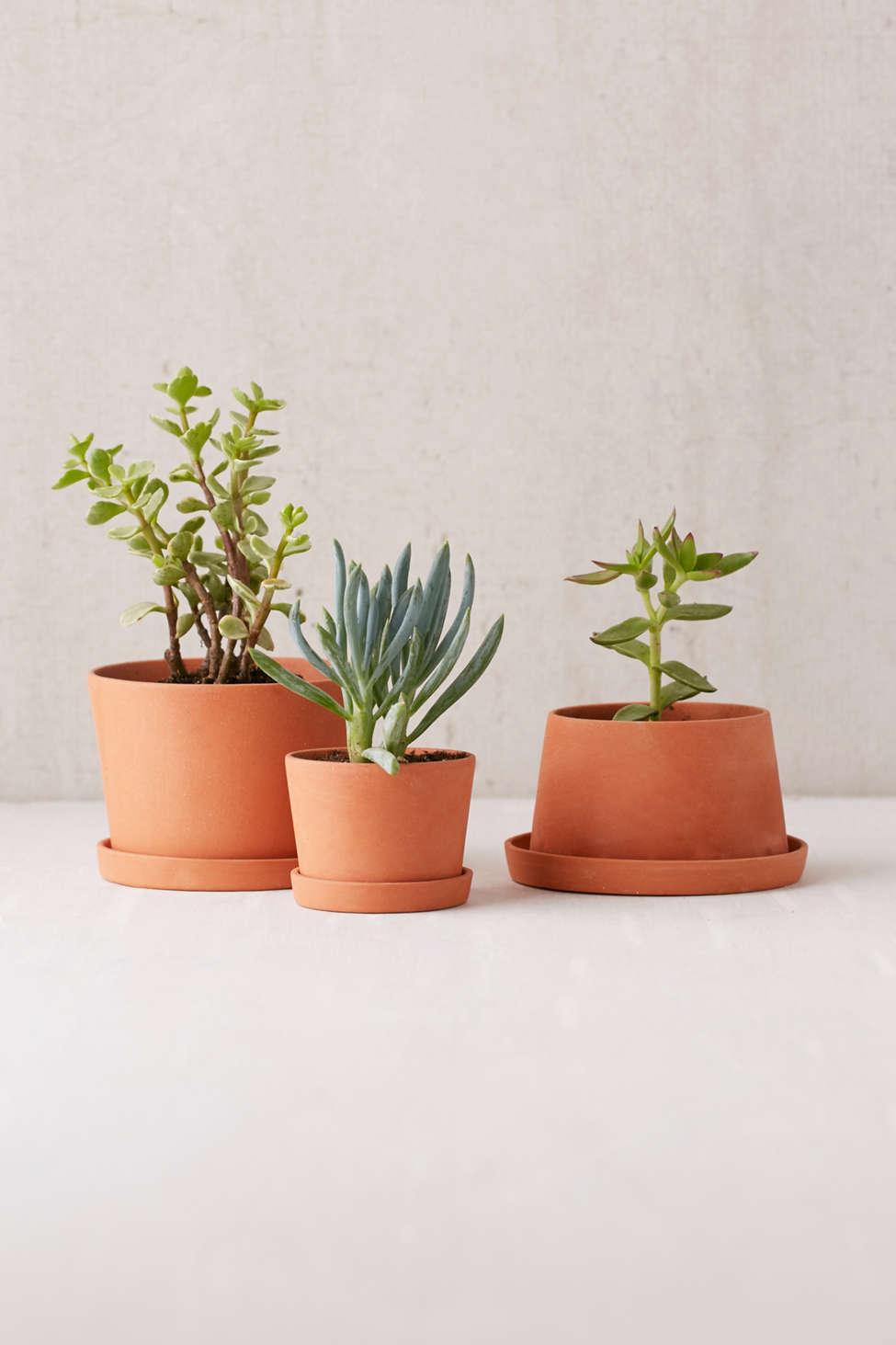 Slide View: 1: Michiko Shimada Mini Terracotta Planters - Set of 3