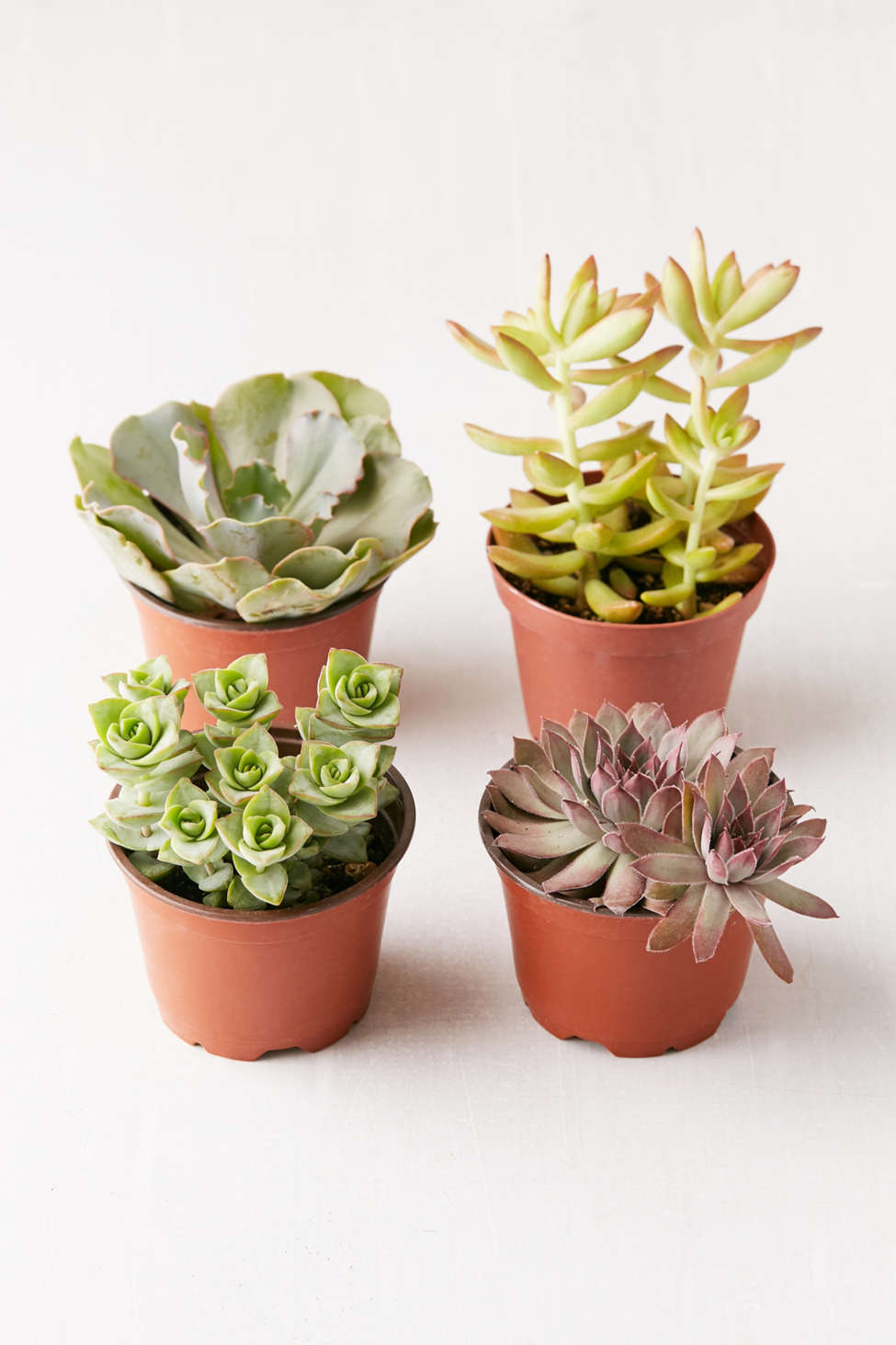 "Slide View: 1: Assorted 4"" Live Succulents - Set of 4"