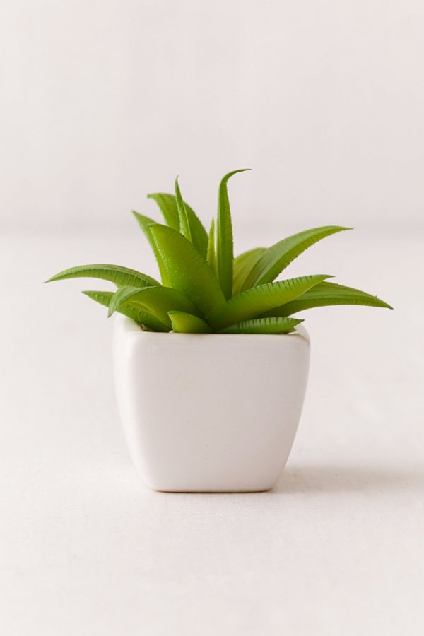 Potted Faux Aloe Succulent Plant Urban Outfitters