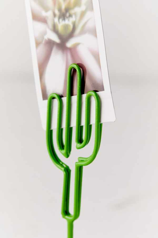 Cactus Photo Clip | Urban Outfitters
