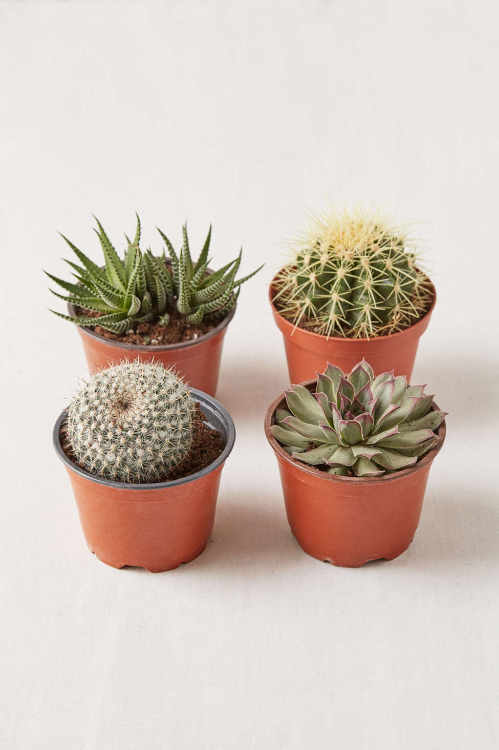 "Slide View: 1: 4"" Live Assorted Hardy Plant - Set of 4"