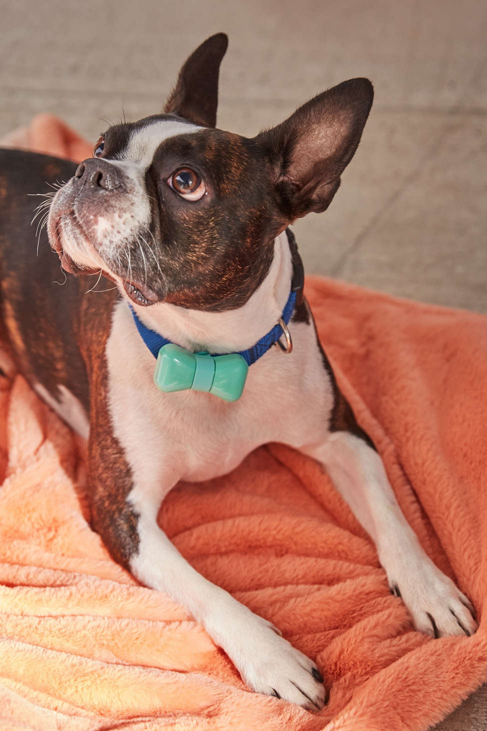 Slide View: 1: WonderWoof Bow Tie Dog Activity Tracker