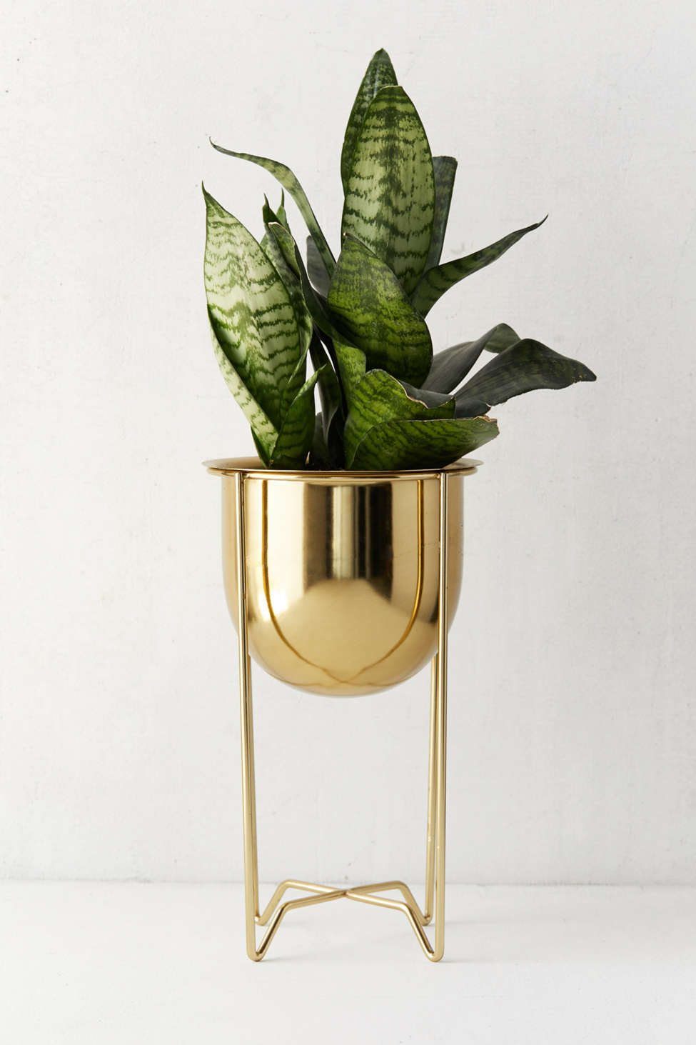 Slide View: 1: Gilded Bowl Planter + Stand