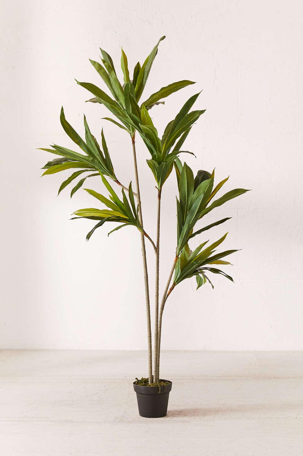 Slide View: 1: Dracena 5â?? Potted Faux Tree