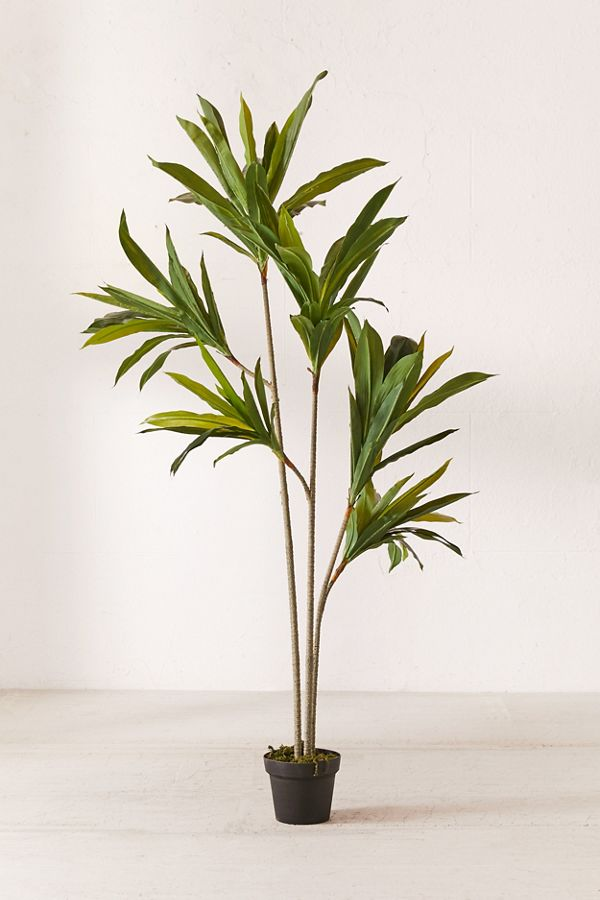 Slide View: 1: Dracena 5â?? Potted Faux Tree