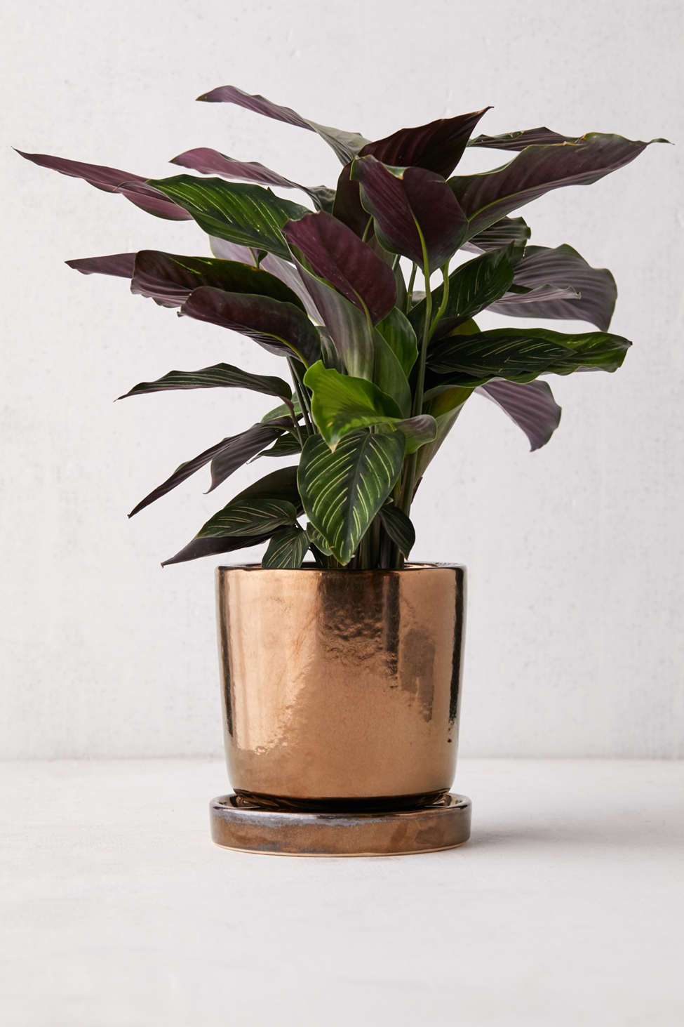 Slide View: 1: Parker Metallic Glazed 6â?� Planter + Drainage Tray